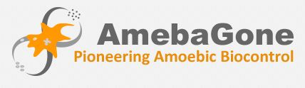 AmebaGone uses benign organisms to attack pathogens in production crops